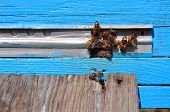 image of honey bee hive  - bee hive with bees on it for your design - JPG