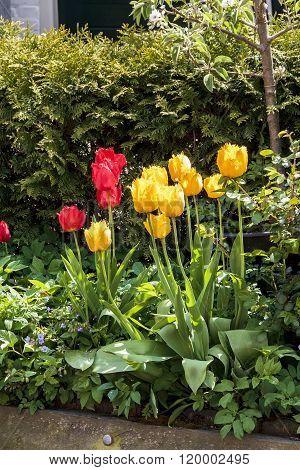 Urban Flowers Netherlands