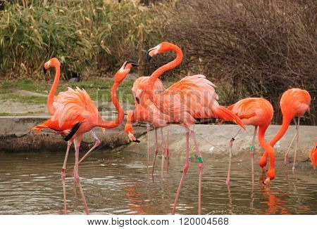 struggling flamingoes