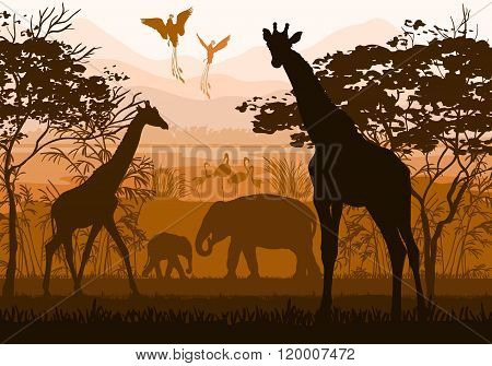 Beauty Of Nature With Wild Animals (giraffe, Elephant, Flamingo, Paradisial Bird)