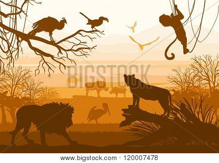 Beauty Of Nature With Wild Animals (lion, Wild Boar, Goat, Cormorant, Monkey, Bird, Peacock,)