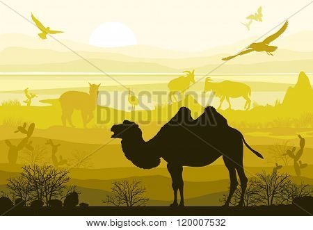 Beauty Of Nature With Wild Animals (camel, Goat, Bird, Ostrich, Alpaca)
