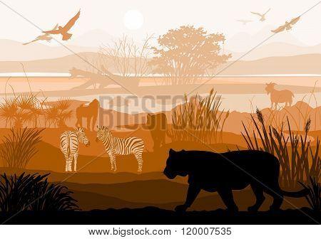 Beauty Of Nature With Wild Animals (tiger, Zebra, Goat, Bird, Monkey, Turtle)