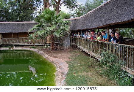 People are watching crocodile show.