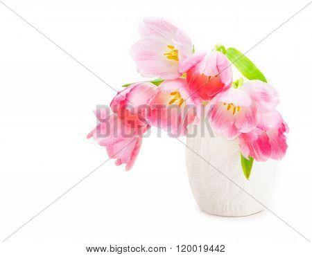 Pink Tulips, White Vase