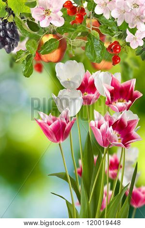 Image Of Flowers And Fruits In The Garden Close Up