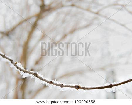 Twig covered with snow, wintertime, copyspace