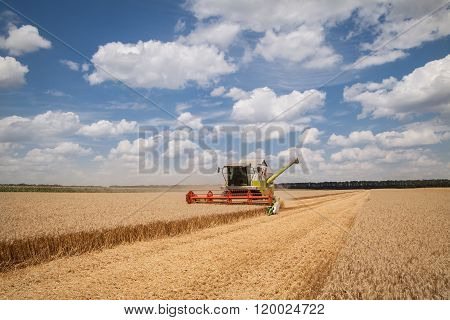 Modern Combine (harvester)  Harvesting On Wheat Field