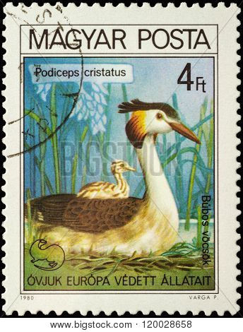 Great Crested Grebe (podiceps Cristatus) On Postage Stamp
