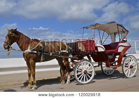 Horse and carriage for transporting tourists