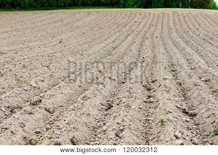 Background Of Newly Plowed Field Ready For New Crops