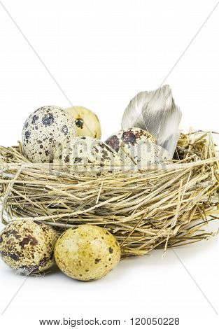 Feather And Motley Quail Eggs.