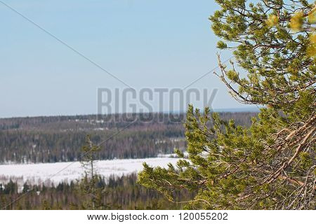 A spring landscape in the middle of a forest on a hill in Lapland