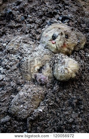 Buried Teddy Bear Lies On A Ash