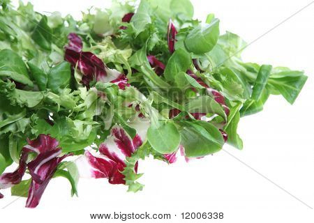 Mixed leaf lettuce salad