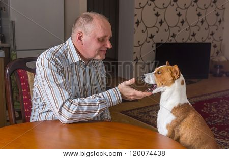Mature man having conversation with basenji dog