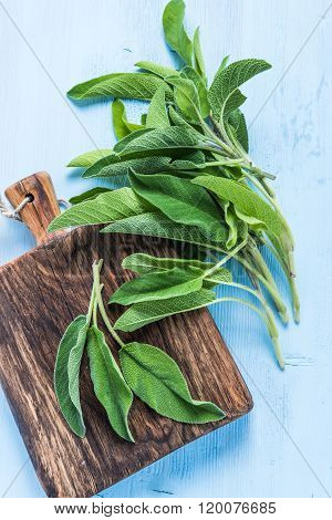 Fresh Sage Herb On Pastel Wooden Table
