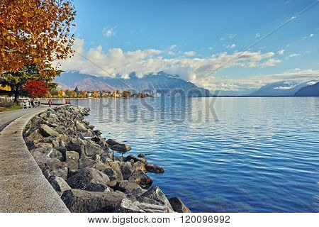 autumn tree in embankment of town of Vevey and Lake Geneva, Switzerland