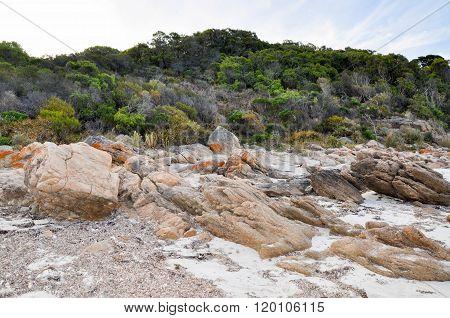 Coastal Dunes: Bunker Bay, Western Australia