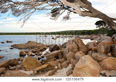 Leaning In: Coastal Tree