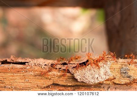 Termites, ants fighting termite on rotten wood, with termite holes.