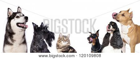 Cat and dog, group of dogs and kitten  looking up