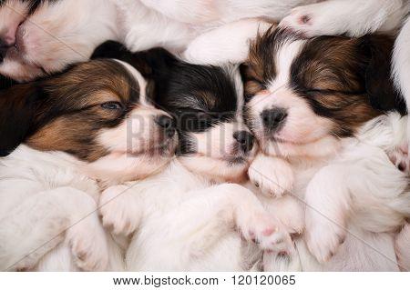 touching dogs sleeping