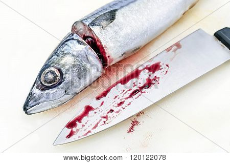 Fresh saba fish and chef's knife