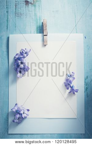 Hyacinth blossom