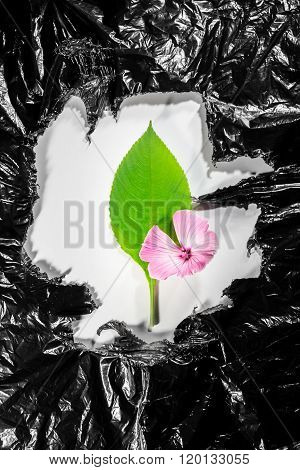 Pink Flower And Green Leaf Surrounded By Black Plastic