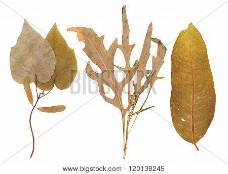 Set Of Wild Dry Pressed Plants