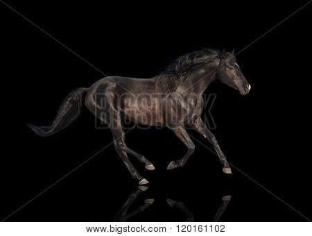 Isolate Of The Black Horse