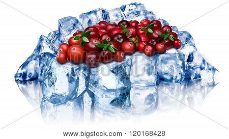 Frozen Cranberries Isolated