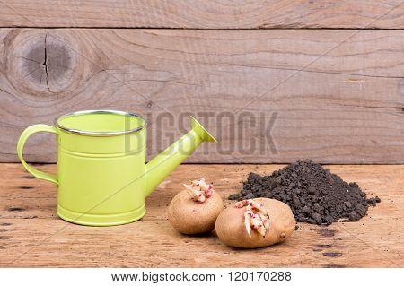 Sprouted Potatoes On An Old Wooden Rustic Table - Selective Focus, Copy Space