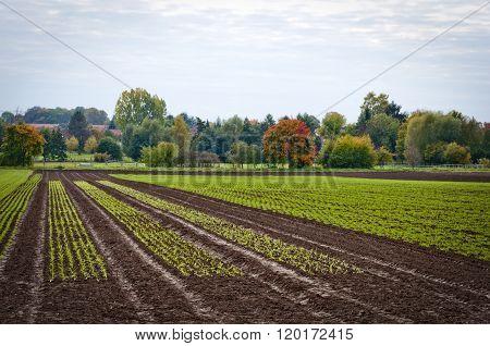 Growing Plant Field