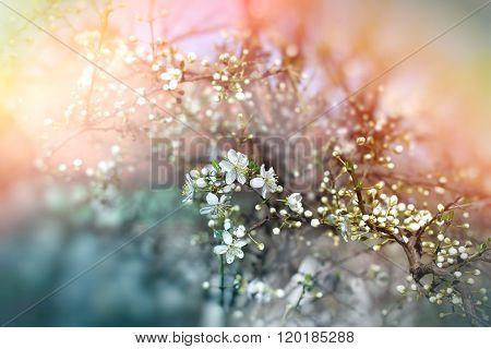 Budding buds - beautiful spring