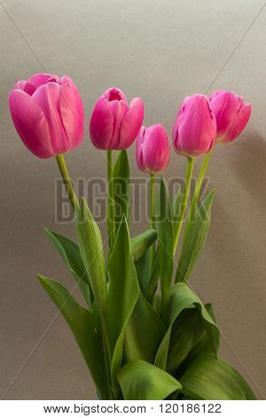 Pink Tulips On The Light Background