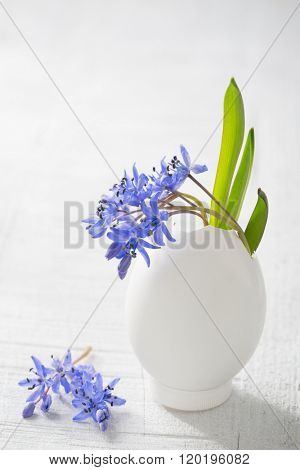 Bunch of early spring flowers ( Scilla siberica) in egg shell on the white wooden plank. Shallow depth of field, focus on near flowers. Easter decor