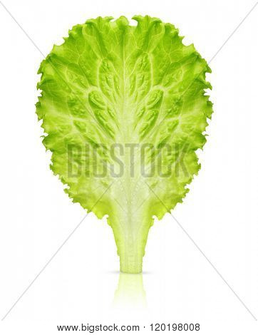 Lettuce leaf isolated on white background.