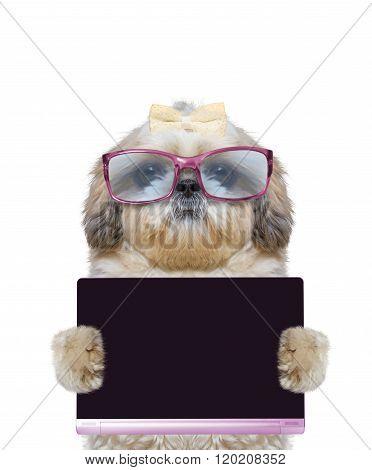 Dog In Big Glasses Holds A Tablet Or Laptop