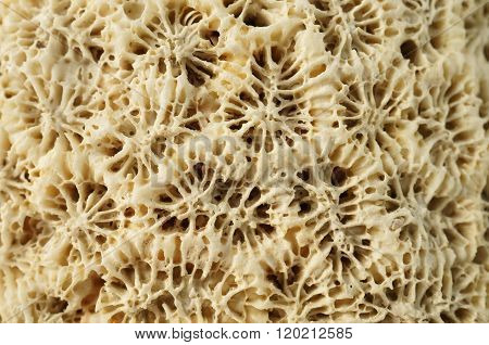 Macro: Weathered coral rock.