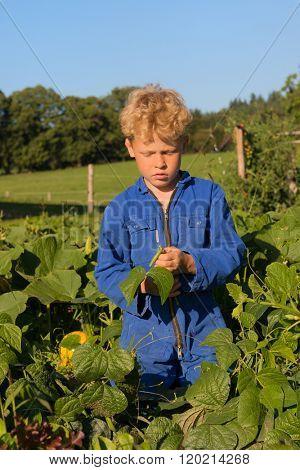 Farm boy picking the beans in vegetable garden