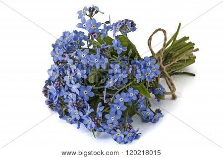 Bouquet Of Blue Forget-me-not, Isolated On White Background