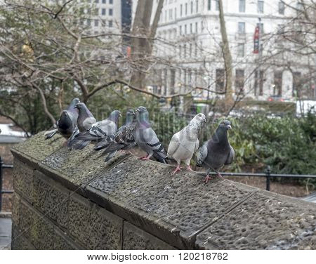 New York City Manhattan fifth avenue near 60th street next to Central Park on cloudy day in winter with Pigeons flying and perched on stone ledge