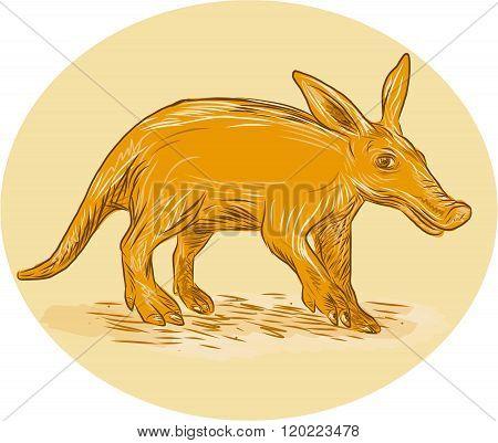 Aardvark African Ant Bear Drawing