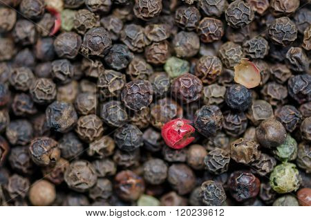 Red Peppercorn In Group Of Black Peppercorns