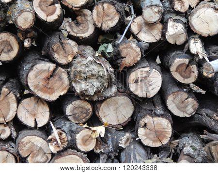 Rustic Firewood