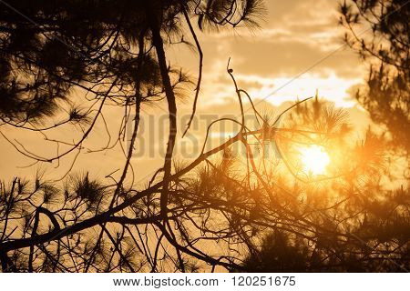 Close up sunrise with branch at Taksin Maharach National Park Tak,Thailand.
