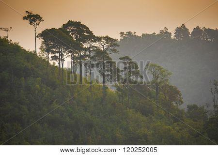 Rainforest with big tree on the mountain at sunrise Taksin Maharach National Park Tak,Thailand.