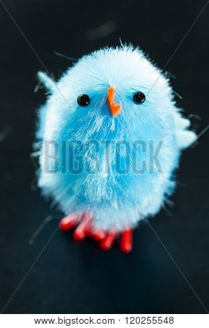 Small Blue Chick